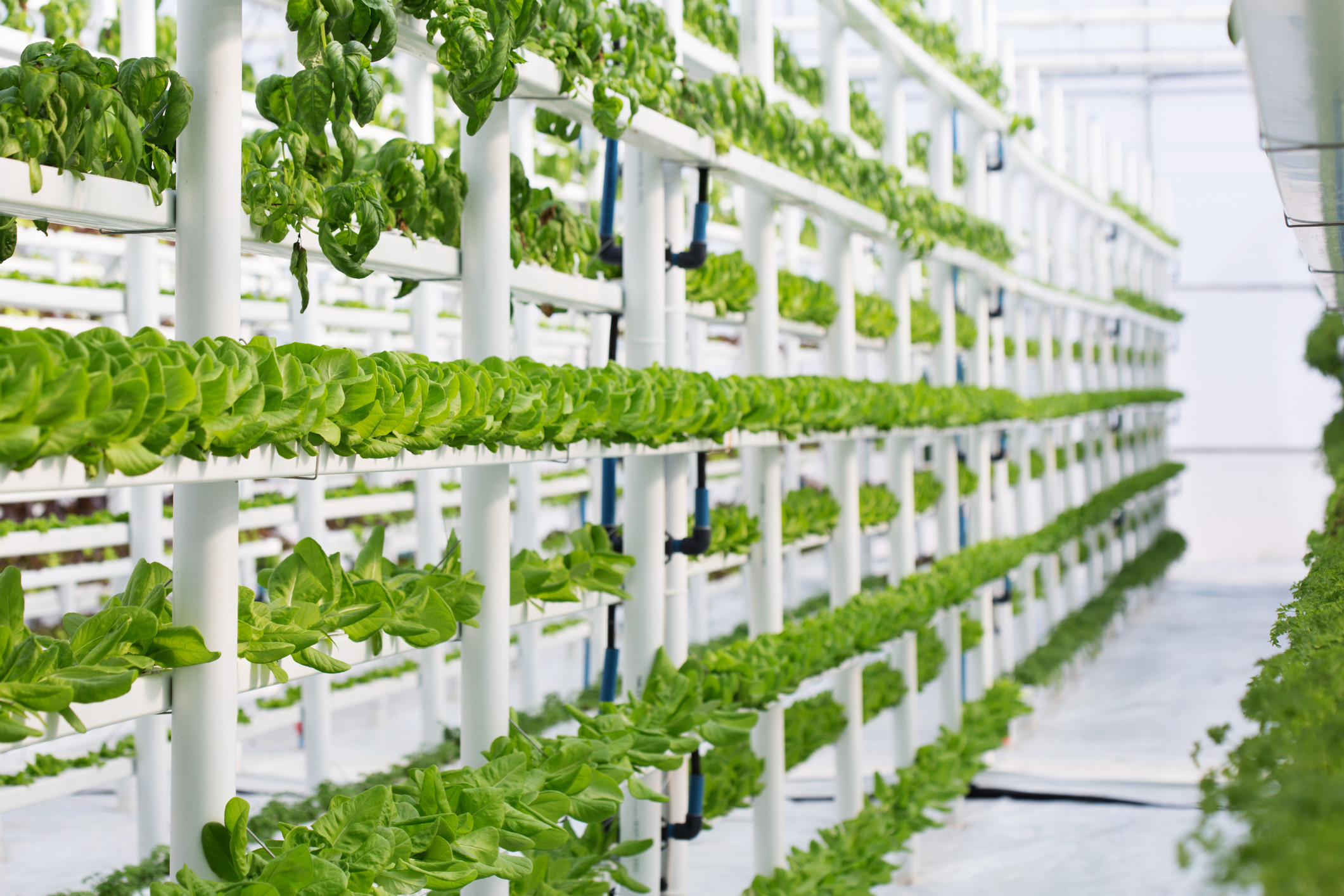Best ideas about Vertical Hydroponic Garden . Save or Pin Vertical Gardens in a Greenhouse Garden & Greenhouse Now.