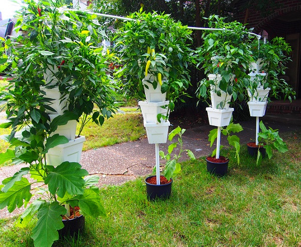 Best ideas about Vertical Hydroponic Garden . Save or Pin Step By Step Hydroponics Systems Gardening Full Tutorial Now.