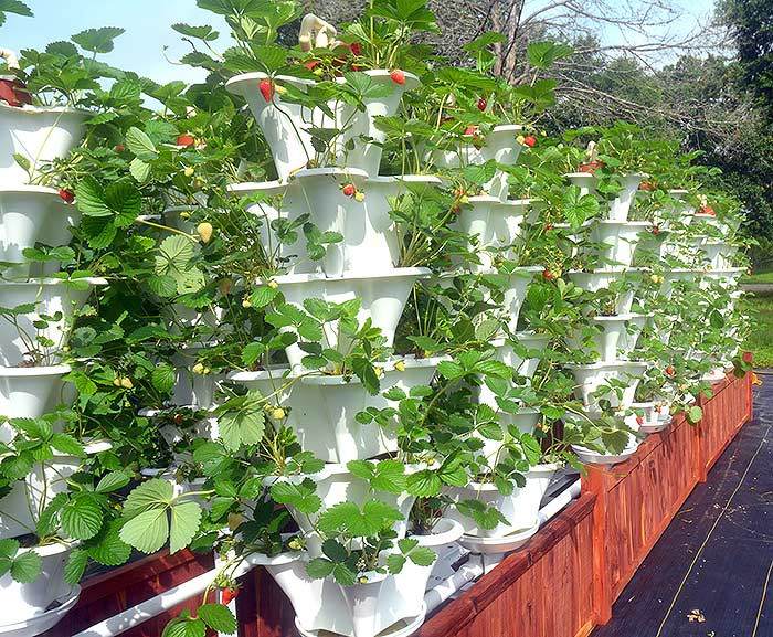 Best ideas about Vertical Hydroponic Garden . Save or Pin Grow 600 Plants in 36sqft Hydroponic Vertical Garden Now.