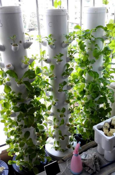 Best ideas about Vertical Hydroponic Garden . Save or Pin Growing Ve ables Vertical Garden Hydro Growing System Now.