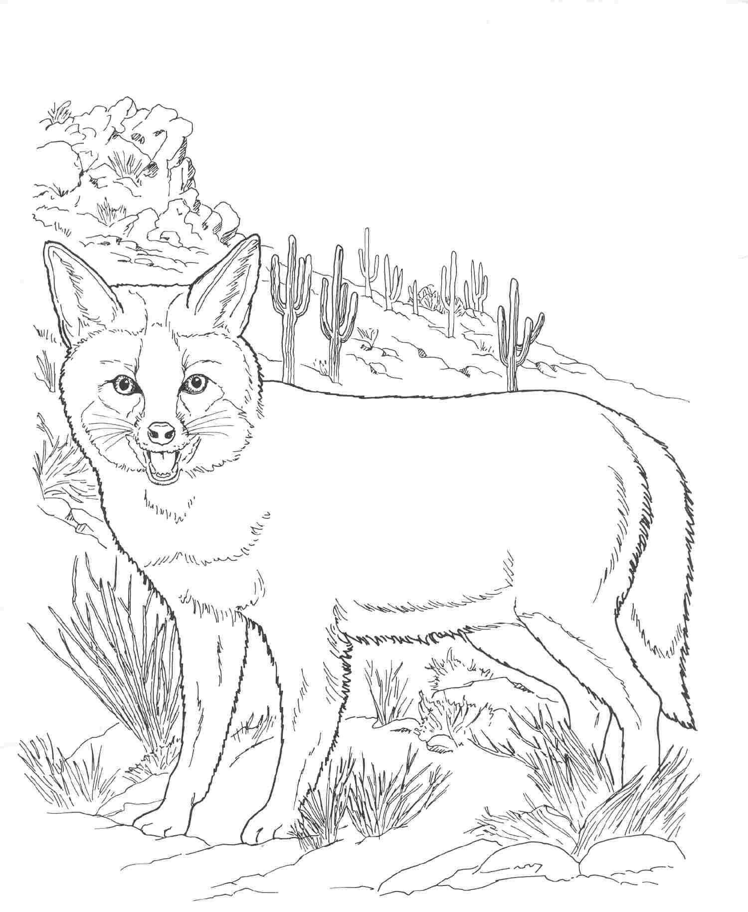 Wildlife Coloring Books  Free Printable Fox Coloring Pages For Kids