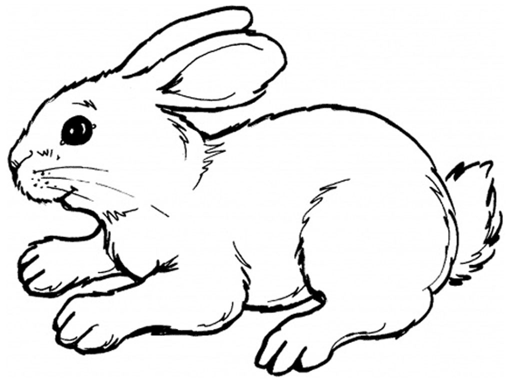 Best ideas about Bunny Coloring Sheet . Save or Pin Free Printable Rabbit Coloring Pages For Kids Now.
