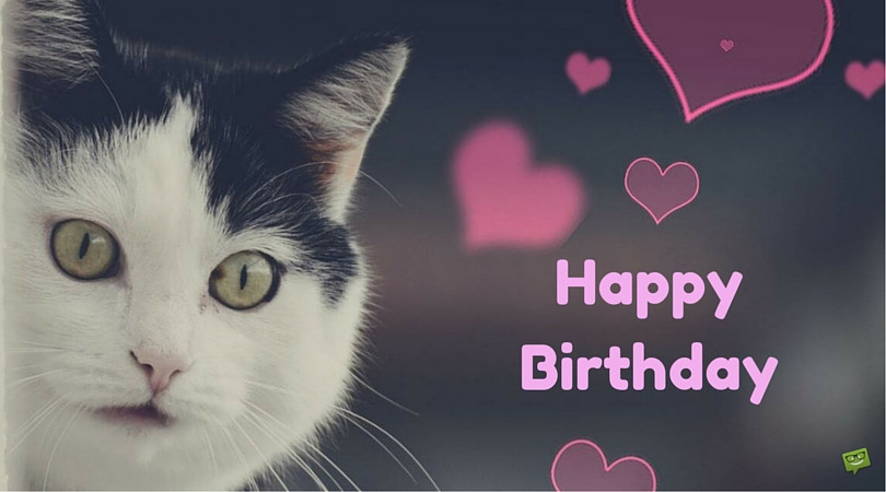 Best ideas about Cat Birthday Wishes . Save or Pin Birthday Wishes With Cats Page 2 Now.