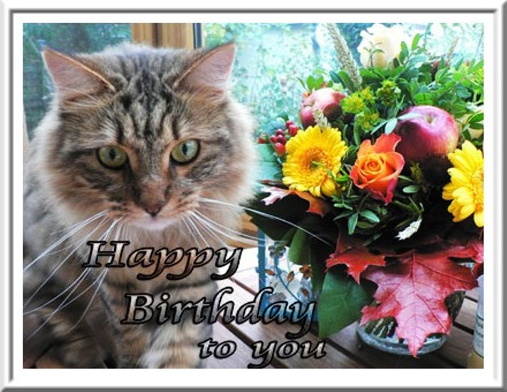 Best ideas about Cat Birthday Wishes . Save or Pin Birthday Wishes With Cats Now.