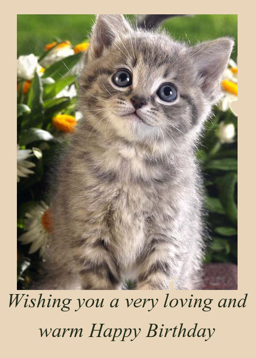 Best ideas about Cat Birthday Wishes . Save or Pin Happy Birthday Wishes With Kittens Now.