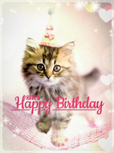 Best ideas about Cat Birthday Wishes . Save or Pin Best Happy Birthday Cat Meme Now.
