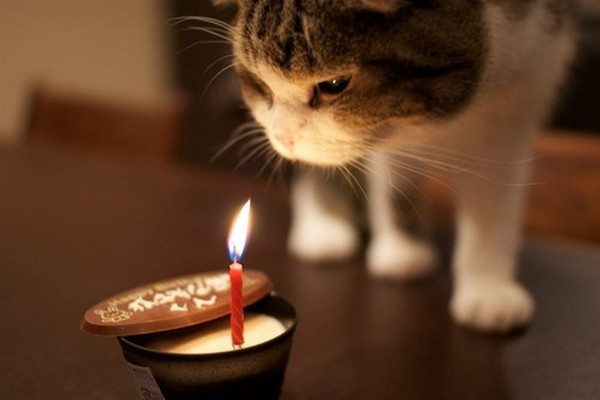 Best ideas about Cat Birthday Wishes . Save or Pin 105 Birthday Wishes for Cats Now.