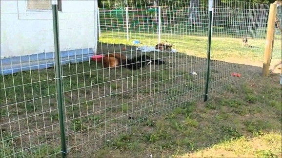 Best ideas about Cheap DIY Fencing For Dogs . Save or Pin Cheap Fencing For Dogs Fence Ideas Now.
