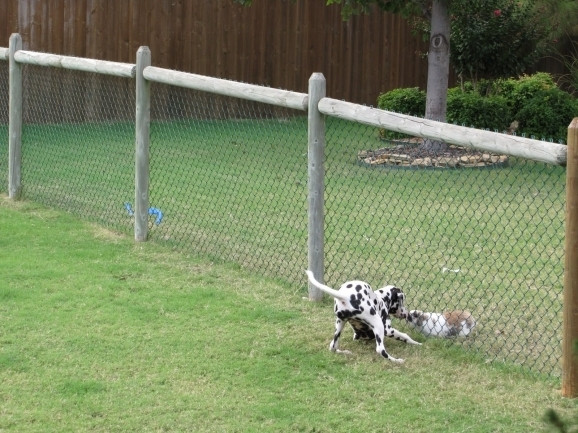 Best ideas about Cheap DIY Fencing For Dogs . Save or Pin Inexpensive Fencing For Dogs Fence Ideas Now.