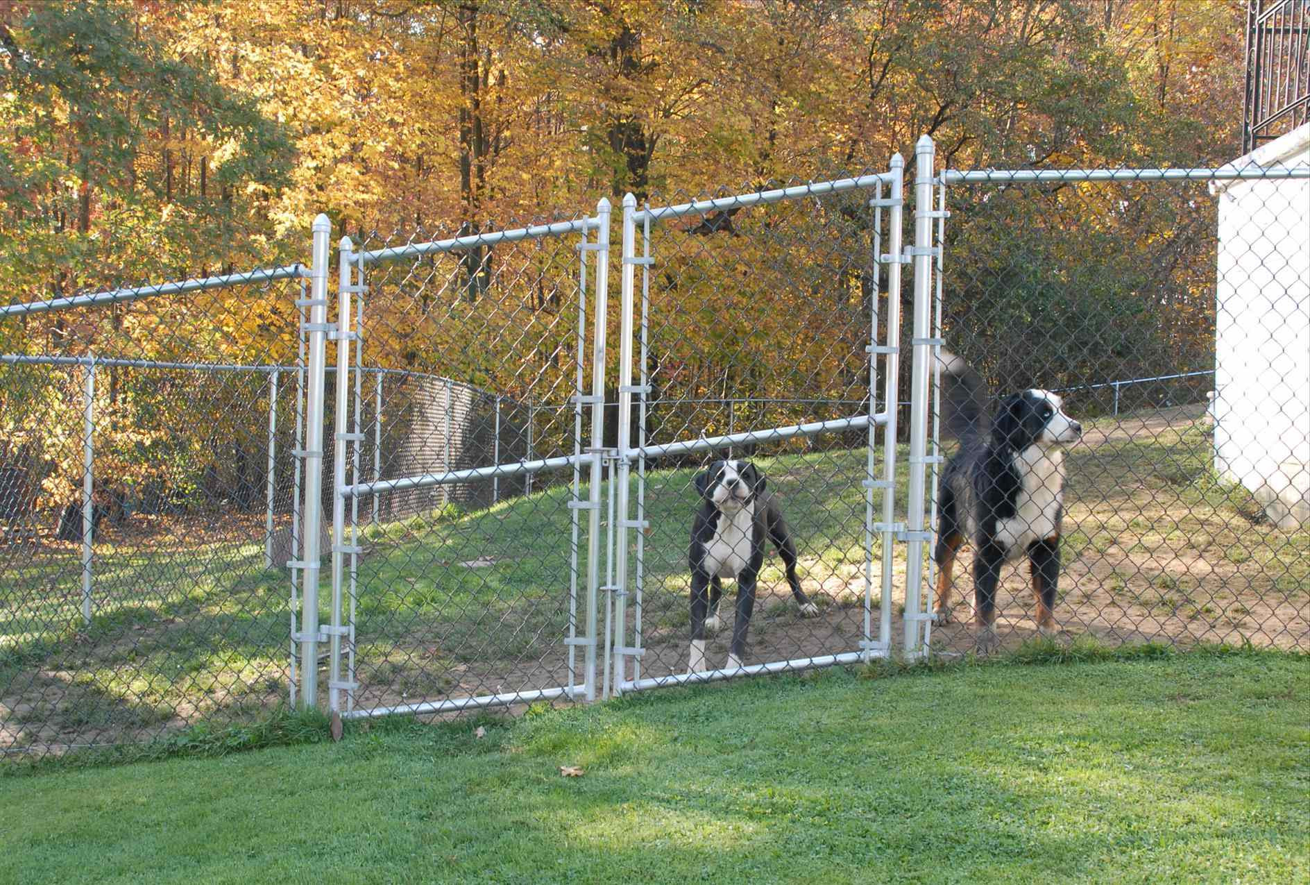 Best ideas about Cheap DIY Fencing For Dogs . Save or Pin Cheap Fence Ideas For Dogs In DIY Reusable And Portable Now.
