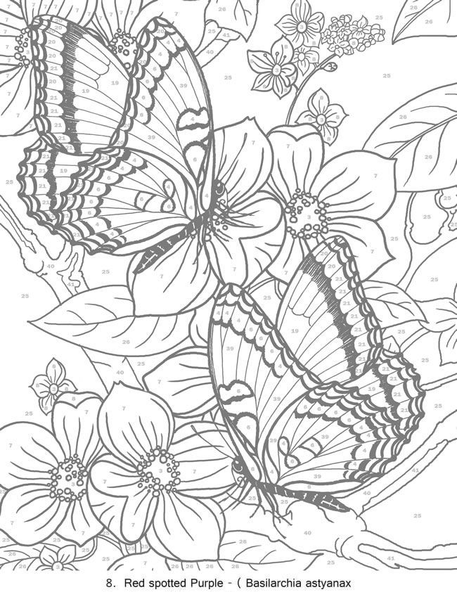 Best ideas about Color By Number Adult Coloring Books . Save or Pin 17 Best images about Random Coloring pages on Pinterest Now.