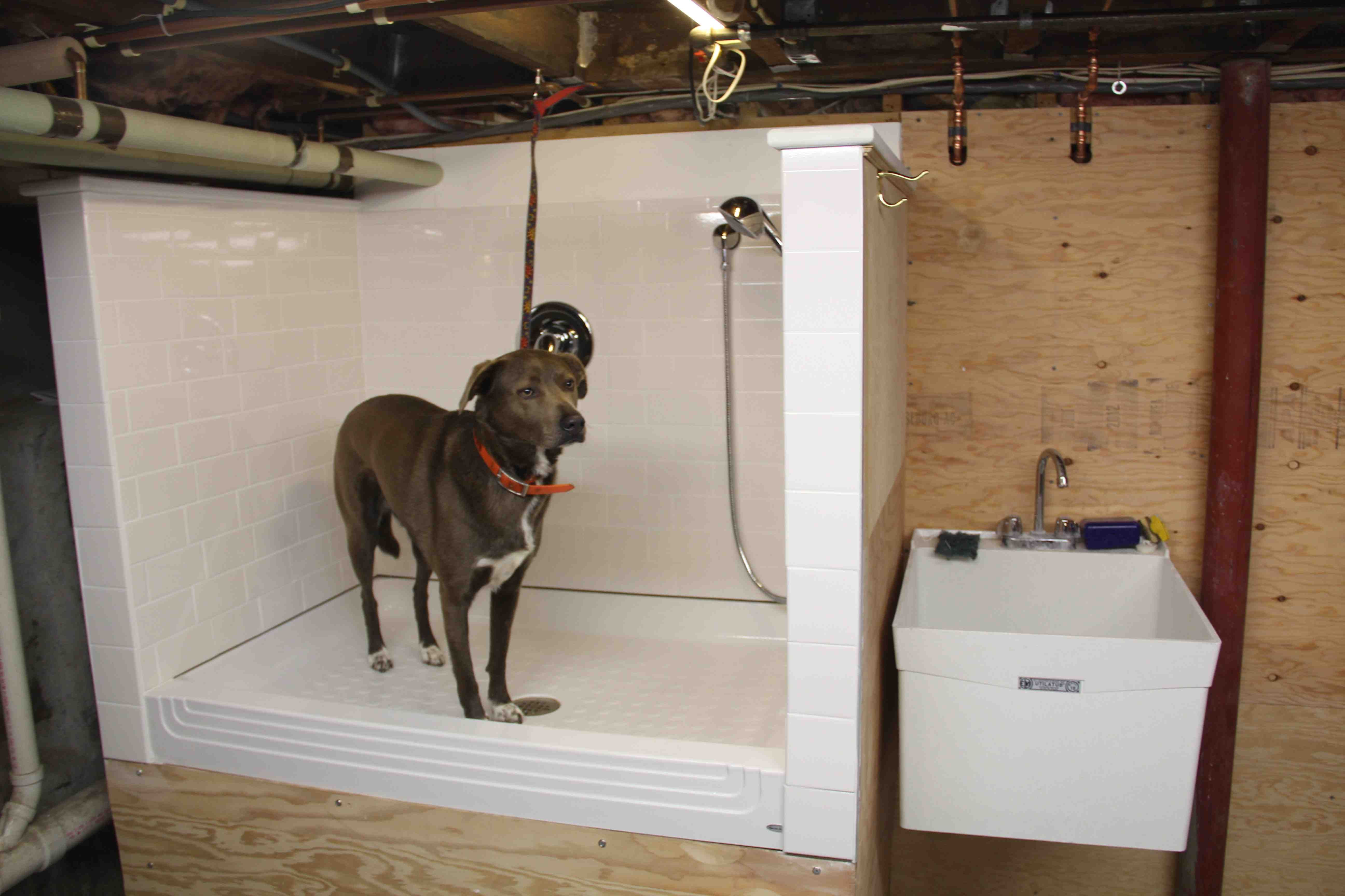 Best ideas about DIY Dog Bathing . Save or Pin How To Build A Dog Wash Station DIY Pets Now.