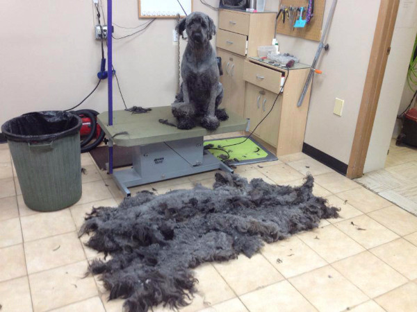 Best ideas about DIY Dog Bathing . Save or Pin Pro Tips for DIY Dog Grooming Dogster Now.