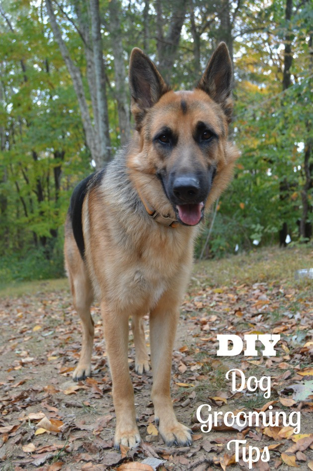 Best ideas about DIY Dog Bathing . Save or Pin DIY Dog Grooming Tips & Dog Grooming Dryers Review Now.