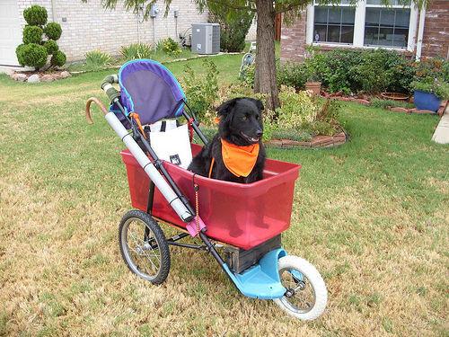 Best ideas about DIY Dog Stroller . Save or Pin DIY Dog Stroller petdiys Now.