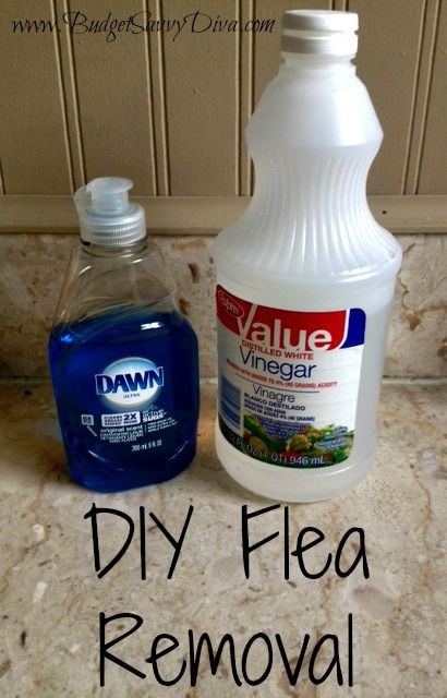 Best ideas about DIY Flea Spray For Dogs . Save or Pin Flea removal Fleas and Divas on Pinterest Now.