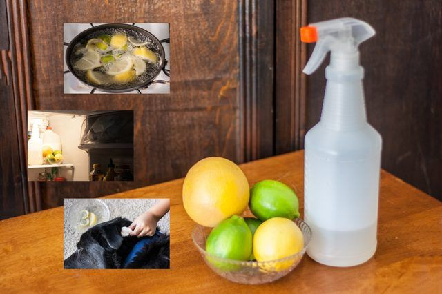 Best ideas about DIY Flea Spray For Dogs . Save or Pin Homemade Flea Killer With Natural Ingre nts Now.