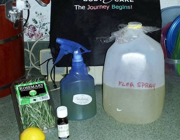 Best ideas about DIY Flea Spray For Dogs . Save or Pin 1000 ideas about Homemade Flea Spray on Pinterest Now.