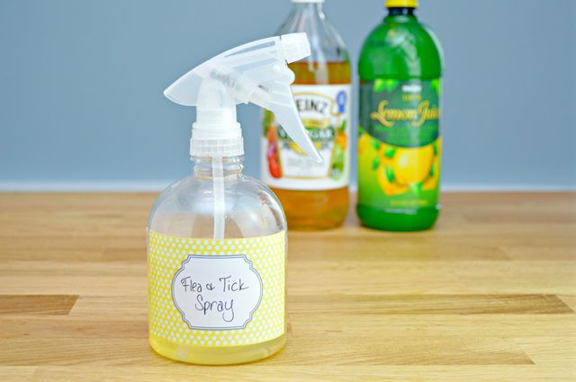 Best ideas about DIY Flea Spray For Dogs . Save or Pin How to Make a Homemade Flea and Tick Repellent Now.