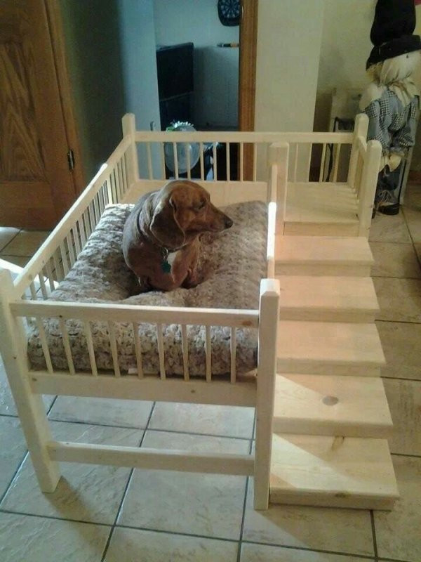 Best ideas about DIY Raised Dog Bed . Save or Pin With Steps 31 DIY Pet Beds for Your Furry Friends … Now.