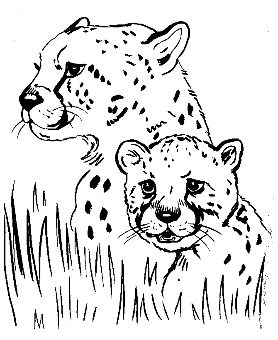 Best ideas about Free Coloring Pages Animals To Print . Save or Pin Free Printable Cheetah Coloring Pages For Kids Now.
