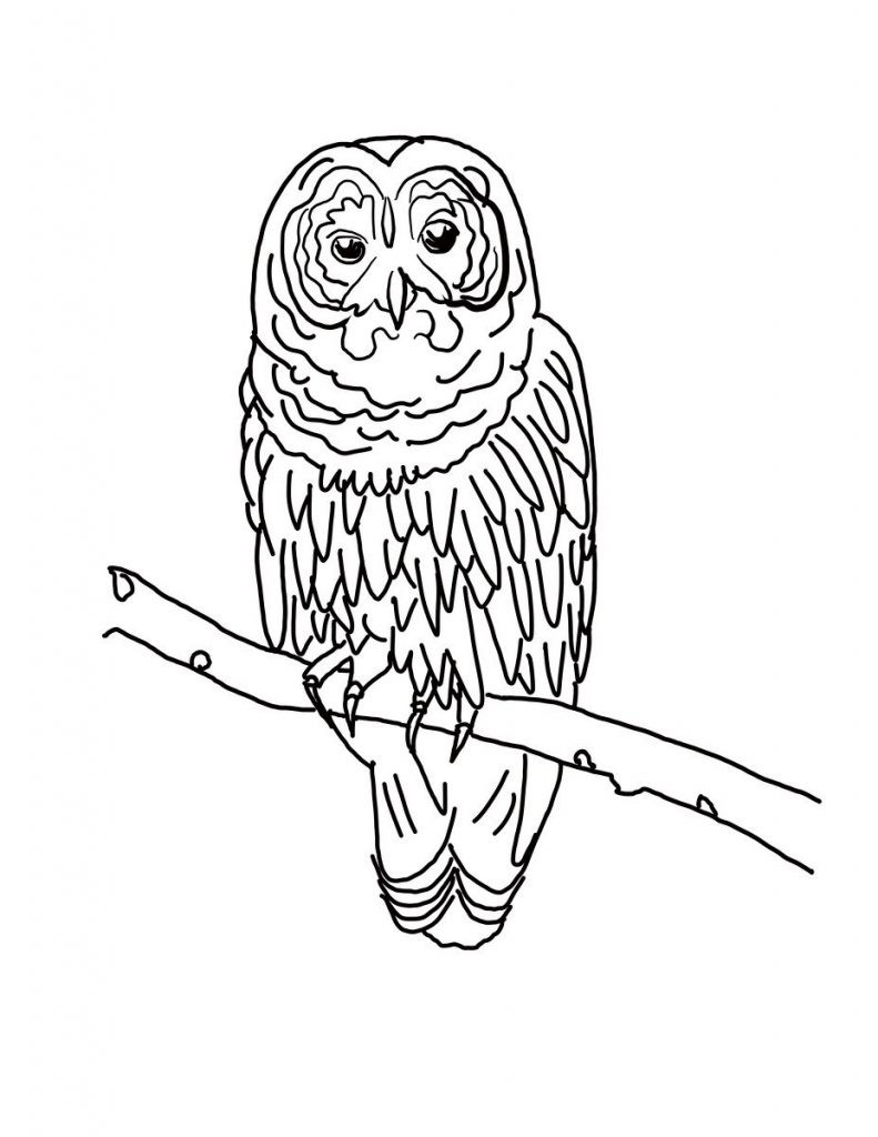 Best ideas about Free Coloring Pages Com . Save or Pin Free Printable Owl Coloring Pages For Kids Now.