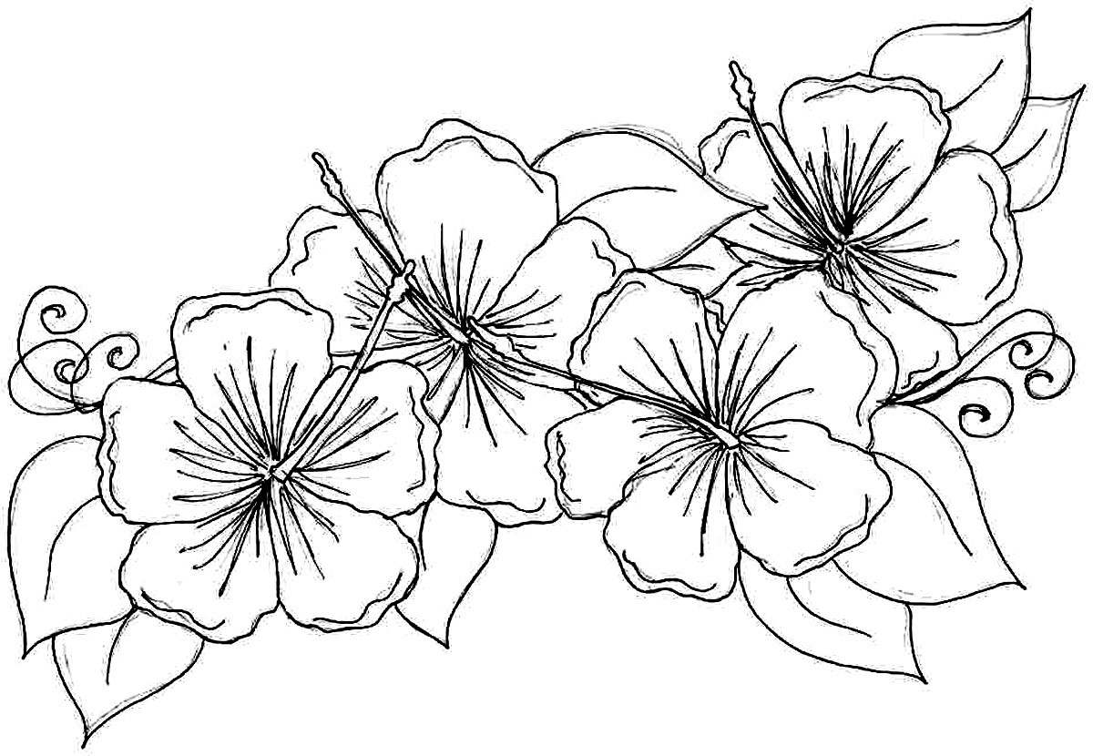 Best ideas about Free Coloring Sheets Flowers . Save or Pin Free Printable Hibiscus Coloring Pages For Kids Now.