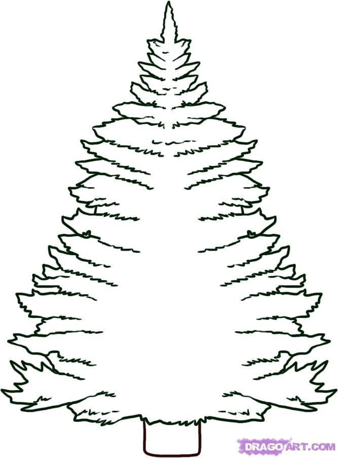 Best ideas about Free Printable Coloring Sheets For Adults Winter Pine Tree . Save or Pin Pine Tree Coloring Pages Coloring Home Now.