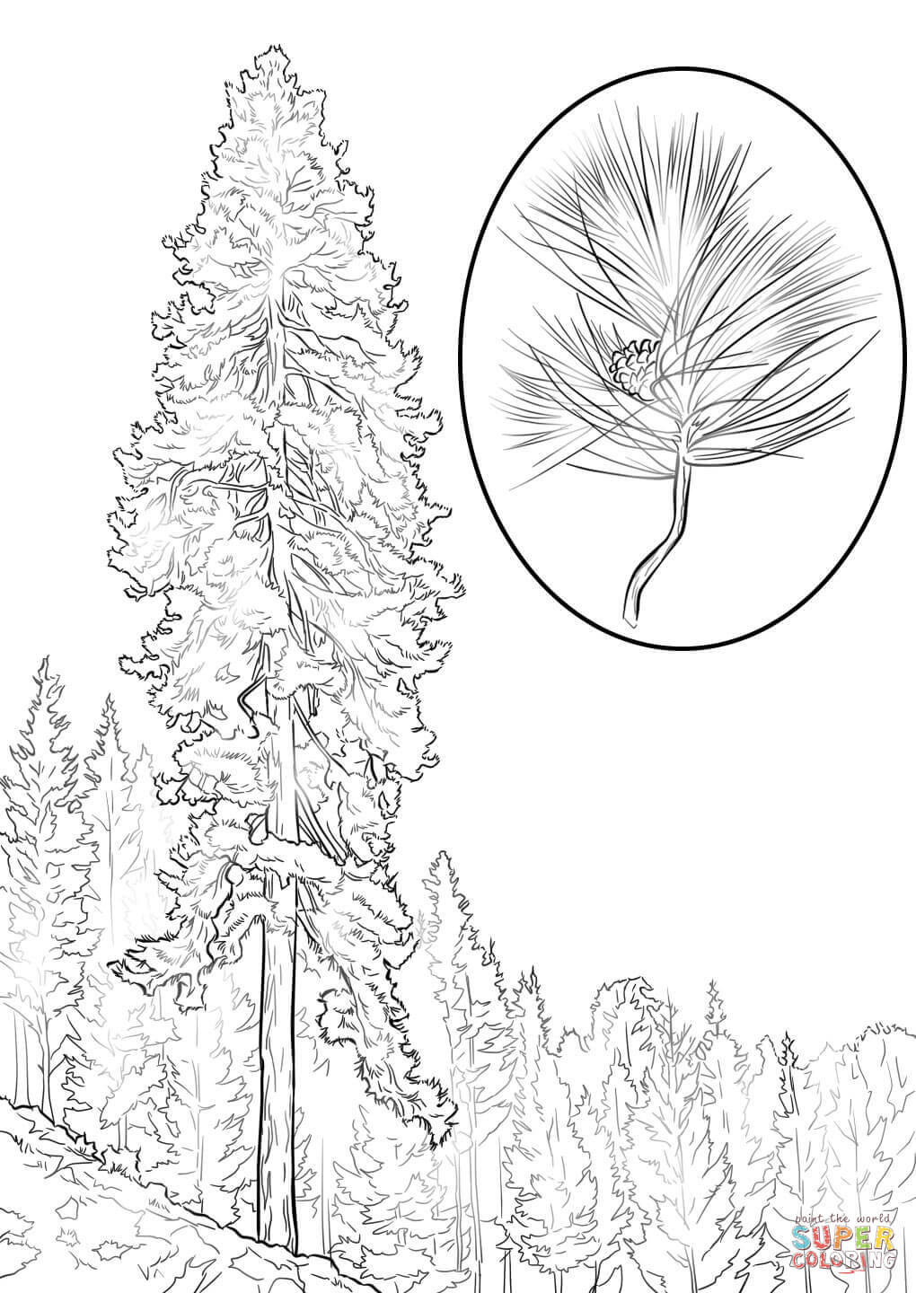 Best ideas about Free Printable Coloring Sheets For Adults Winter Pine Tree . Save or Pin Coloring Pages Pine Tree Coloring Home Now.
