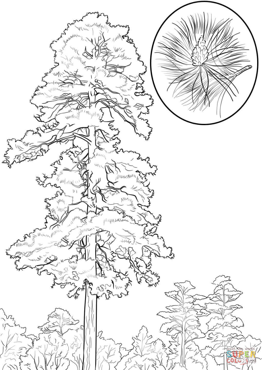 Best ideas about Free Printable Coloring Sheets For Adults Winter Pine Tree . Save or Pin Pine Trees Coloring Pages Coloring Home Now.