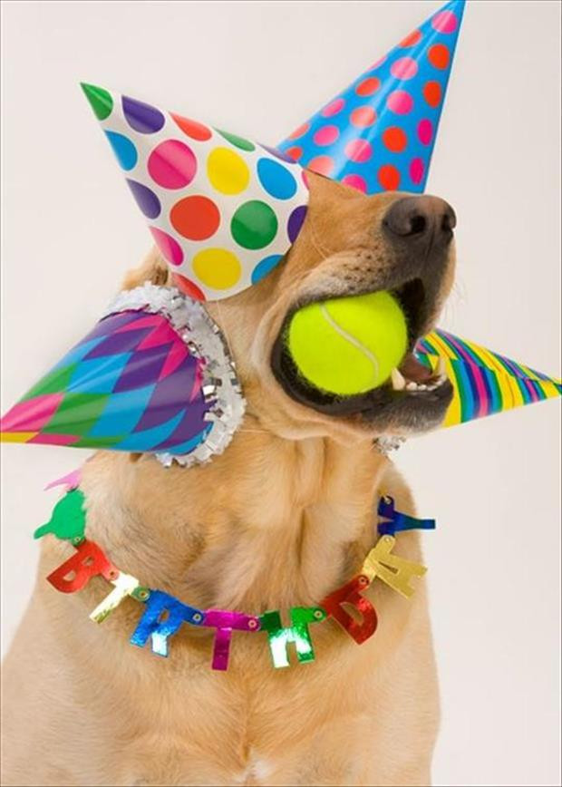 Best ideas about Funny Animal Birthday . Save or Pin Funny Animal Picture Overload 42 Pics Now.