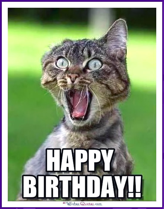 Best ideas about Funny Animal Birthday . Save or Pin Happy Birthday Memes with Funny Cats Dogs and Cute Now.