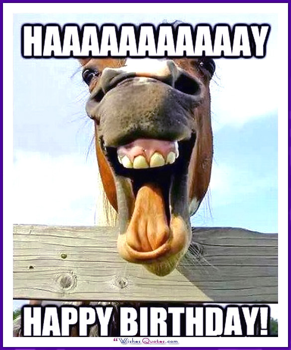 Best ideas about Funny Animal Birthday . Save or Pin Happy Birthday Memes with Funny Cats Dogs and Cute Animals Now.