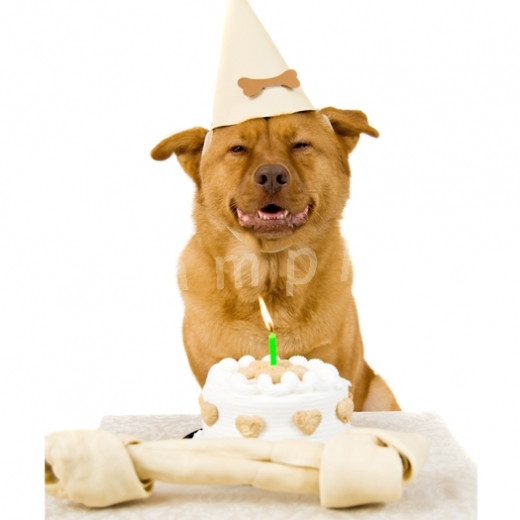 Best ideas about Funny Animal Birthday . Save or Pin Animal Funny Birthday Quotes QuotesGram Now.