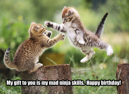 Best ideas about Funny Animal Birthday . Save or Pin Funny Birthday Quotes For Girls QuotesGram Now.