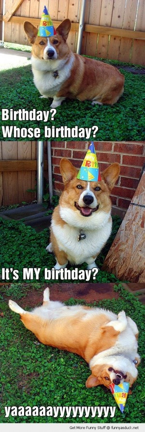 Best ideas about Funny Animal Birthday . Save or Pin Birthday Quotes Memes Animals QuotesGram Now.