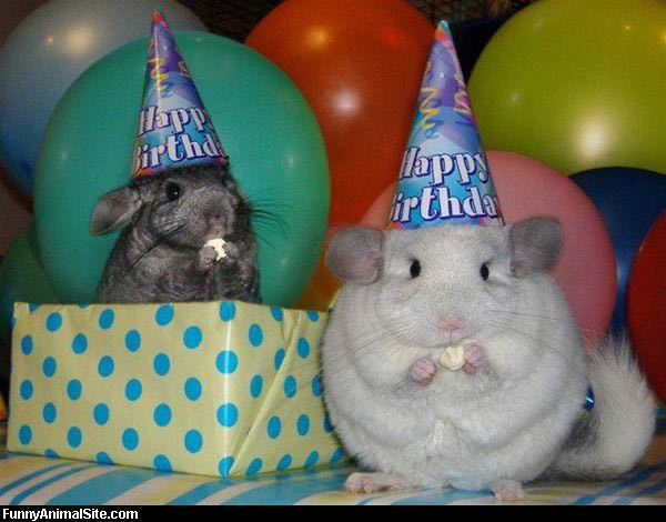 Best ideas about Funny Animal Birthday . Save or Pin Funny and Wild Animals Funny Animals Birthday Now.