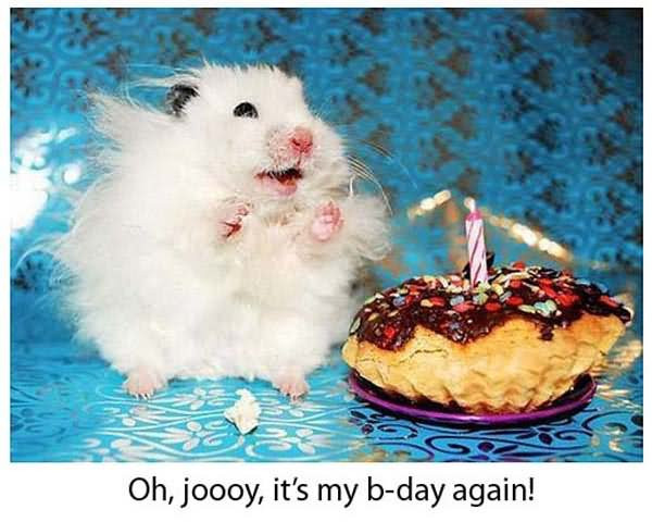 Best ideas about Funny Animal Birthday . Save or Pin 20 Very Funny Birthday Animal And Now.