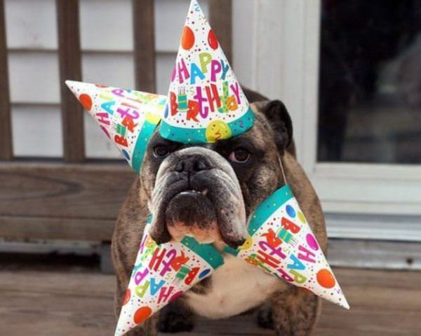 Best ideas about Funny Animal Birthday . Save or Pin Funny funny birthday pictures Now.