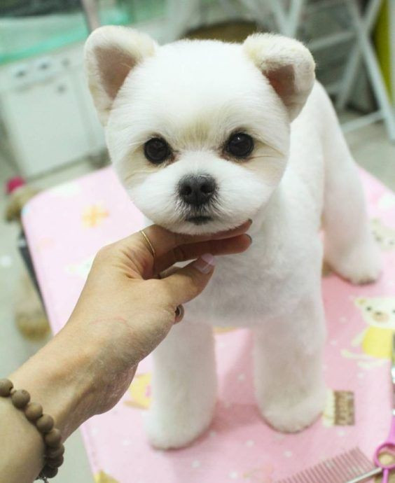 Best ideas about Funny Dog Haircuts . Save or Pin 15 Very Interesting and Funny Dog Haircuts Now.