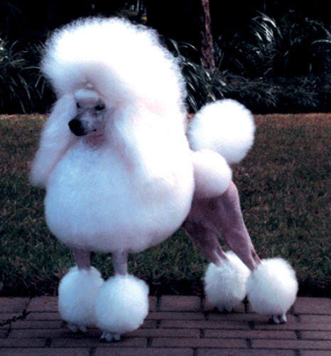 Best ideas about Funny Dog Haircuts . Save or Pin 20 Bizarre Dog Hairdos Now.