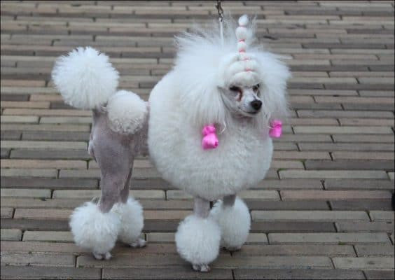 Best ideas about Funny Dog Haircuts . Save or Pin 15 Very Interesting and Funny Dog Haircuts Page 3 of 3 Now.