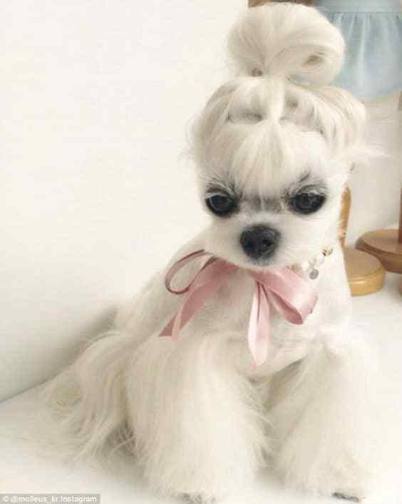 Best ideas about Funny Dog Haircuts . Save or Pin 15 Very Interesting and Funny Dog Haircuts This Way e Now.