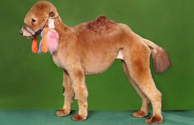 Best ideas about Funny Dog Haircuts . Save or Pin Hilarious Dog Haircuts 49 pics Izismile Now.