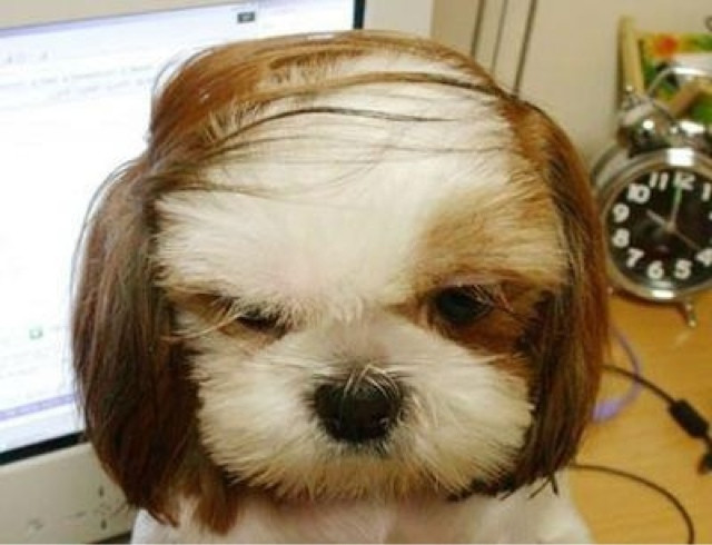 Best ideas about Funny Dog Haircuts . Save or Pin Dogs With Human Hairstyles Slapped Ham Now.