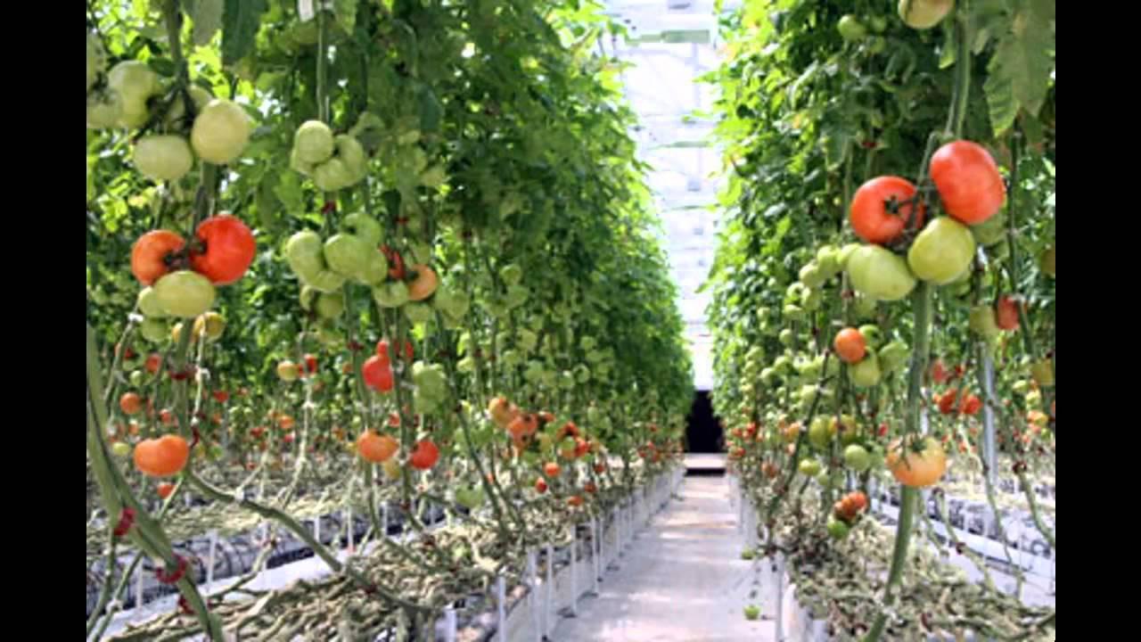 Best ideas about Home Vegetable Garden Ideas . Save or Pin Home Vertical Ve able Gardening Ideas – Modern Garden Now.