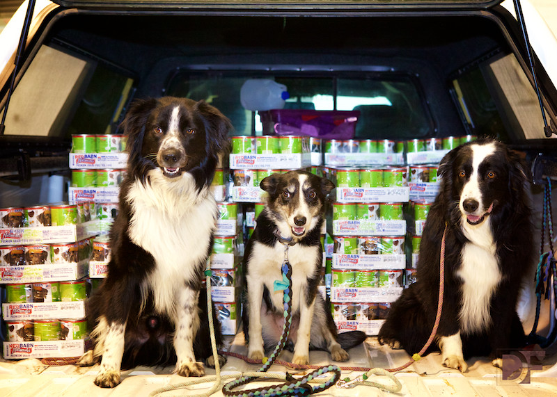 Best ideas about Pet Food Pantry . Save or Pin Colorado Pet Food Bank Re Distributes Pet Food Donation Now.