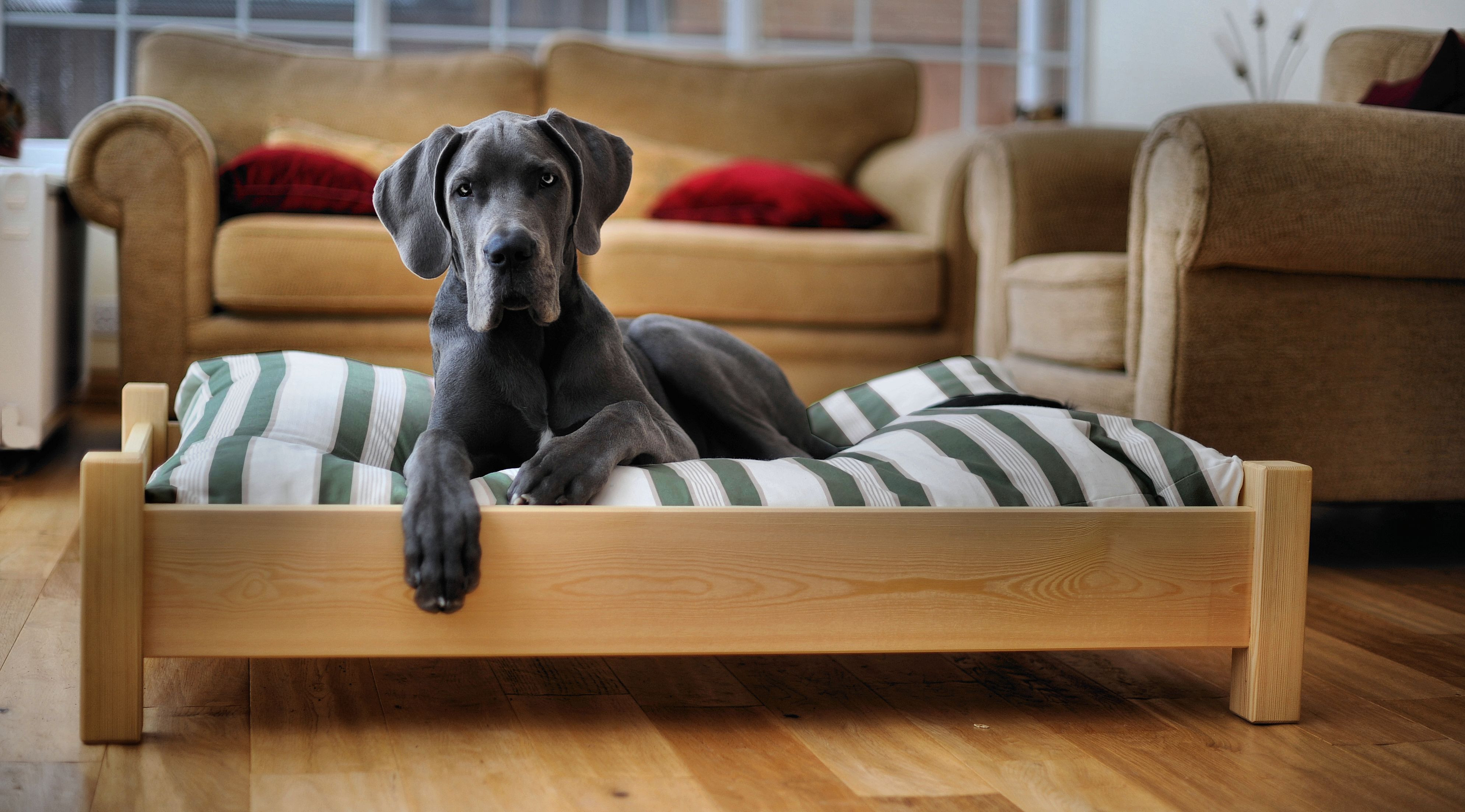 Best ideas about Raised Dog Beds DIY . Save or Pin Diy Dog Bed Frame Do It Your Self Now.