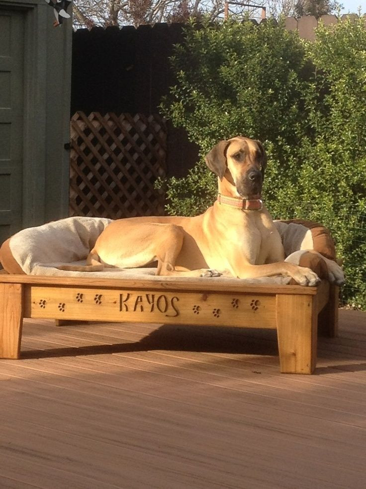 Best ideas about Raised Dog Beds DIY . Save or Pin Best Elevated Dog Bed Ideas Pinterest Raised Dog Beds Now.