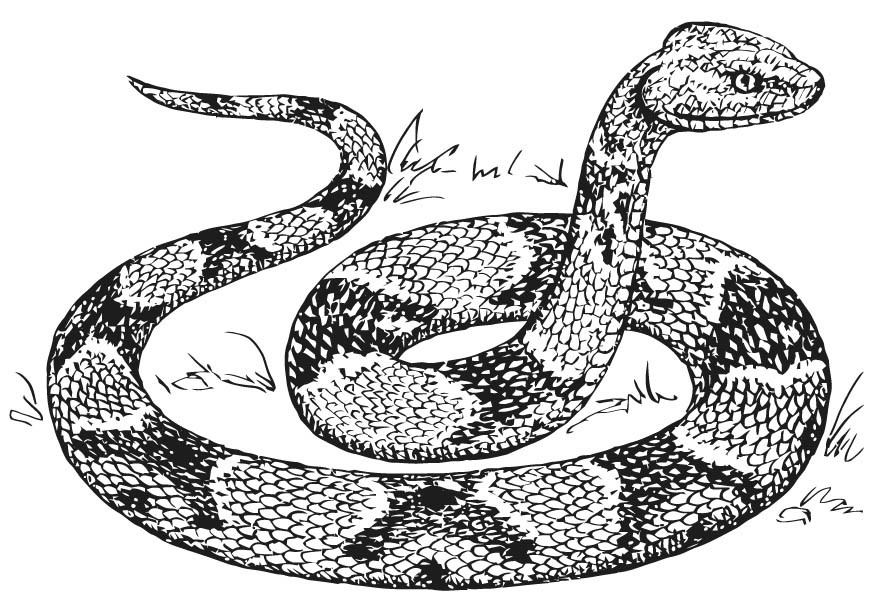 Best ideas about Snake Coloring Pages For Adults . Save or Pin Free Printable Snake Coloring Pages For Kids Now.